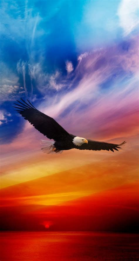 Flying Eagle - iPhone wallpapers @mobile9   #bird #nature